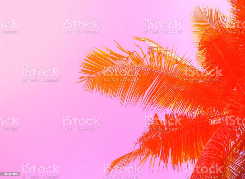 Palm tree on sky background. Palm leaf ornament. Pink and orange toned photo. stock photo