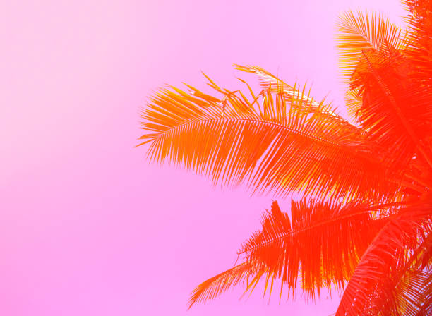 Palm tree on sky background. Palm leaf ornament. Pink and orange toned photo. stock photo
