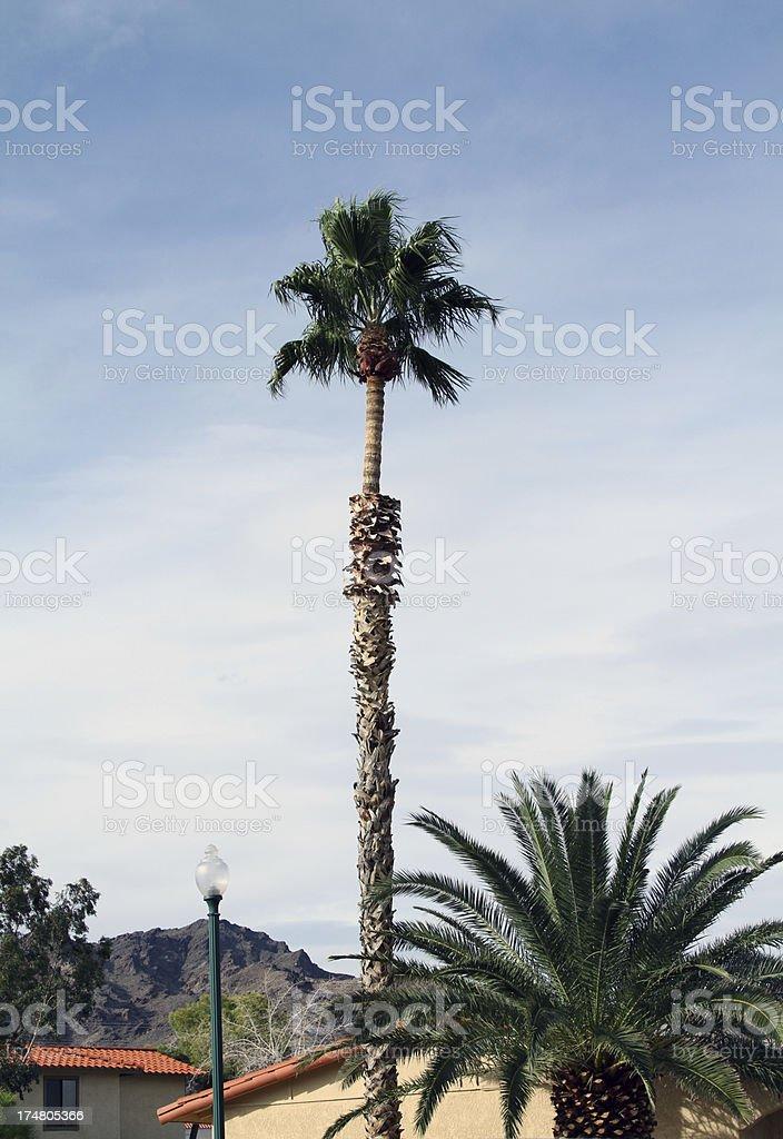 palm tree on sky royalty-free stock photo
