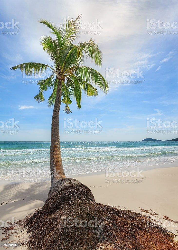 palm tree on the beach stock photo