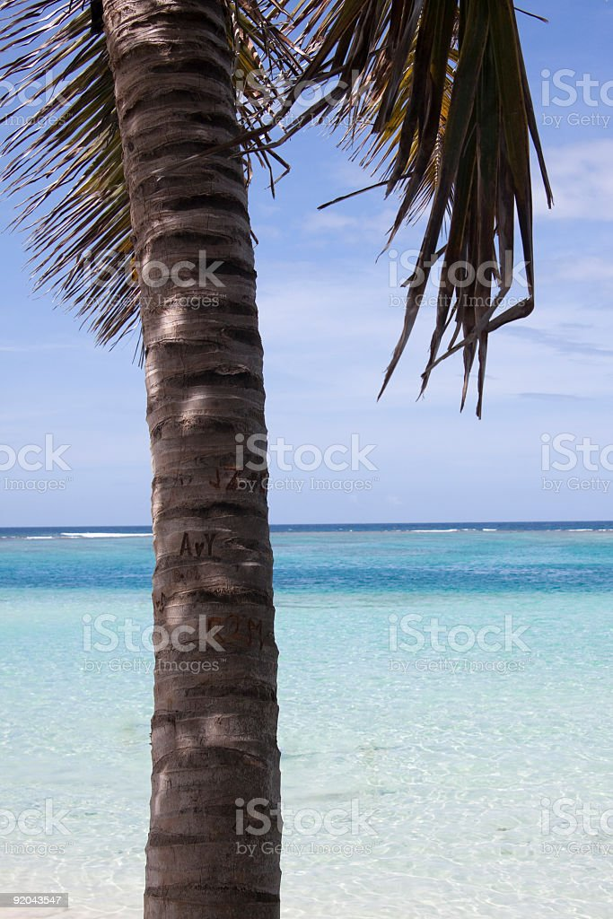 Palm Tree on the Beach royalty-free stock photo