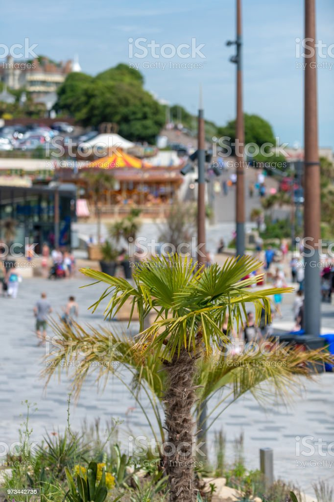 Palm tree on the seafront in Bournemouth stock photo