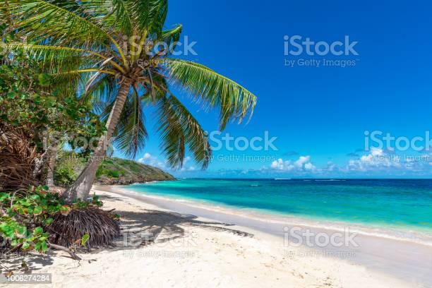 Palm tree on the tropical beach picture id1006274284?b=1&k=6&m=1006274284&s=612x612&h= ny4h t xcqjj0i6kvvyozq9oxznholexhp8qx260xc=