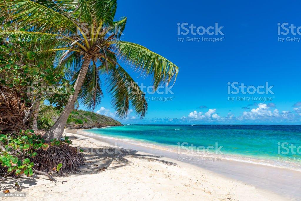 Palm tree on the tropical beach stock photo