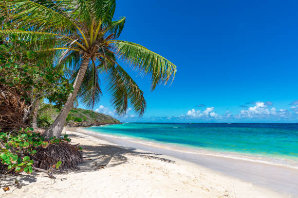palm tree on the tropical beach - beach stock pictures, royalty-free photos & images