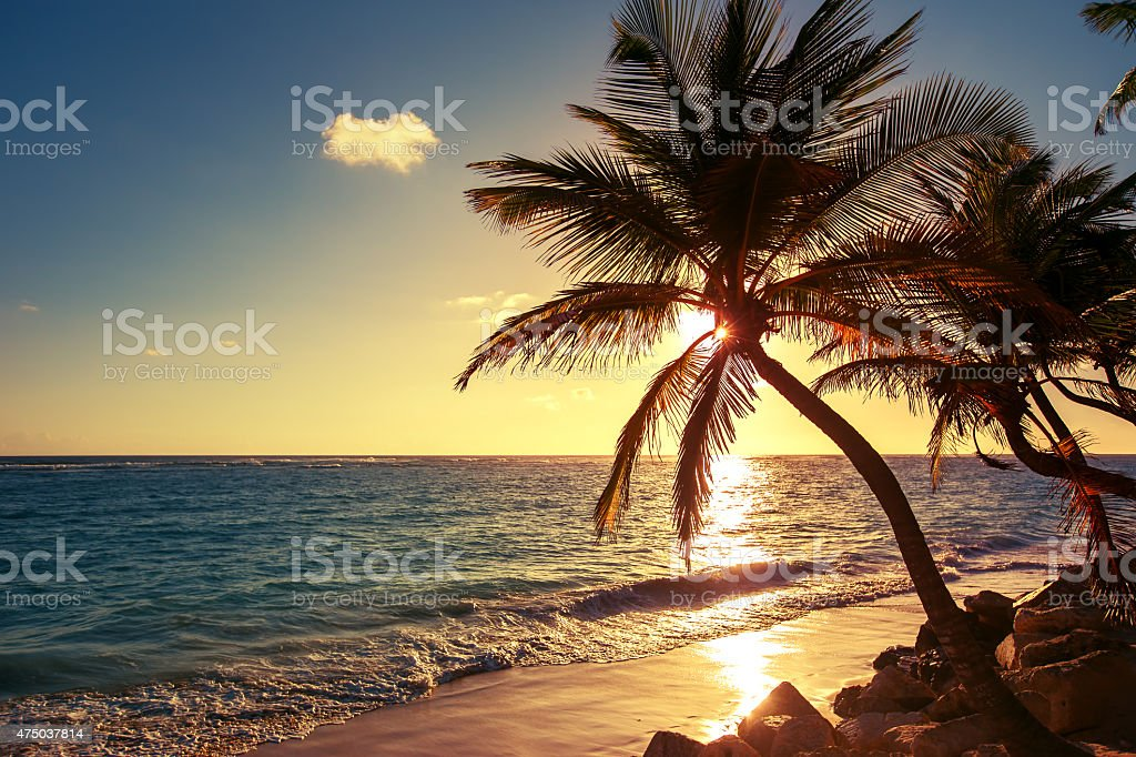 Palm tree on the tropical beach stock photo