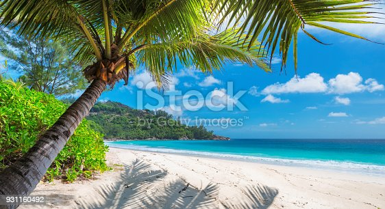 istock Palm tree on tropical beach. 931160492