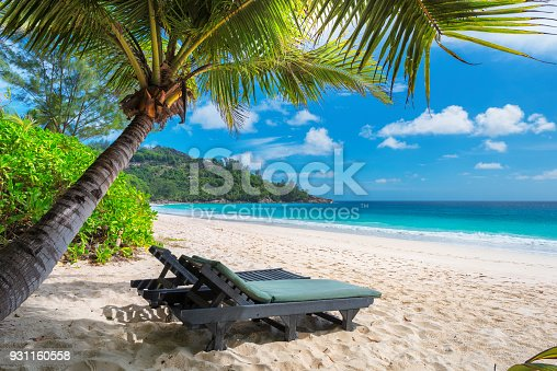 istock Palm tree on tropical beach. 931160558