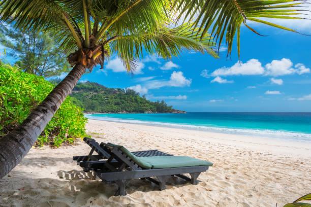 Palm tree on tropical beach. stock photo