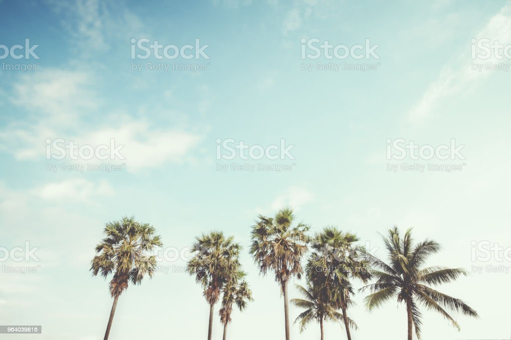 Palm tree on tropical beach - Royalty-free Beach Stock Photo