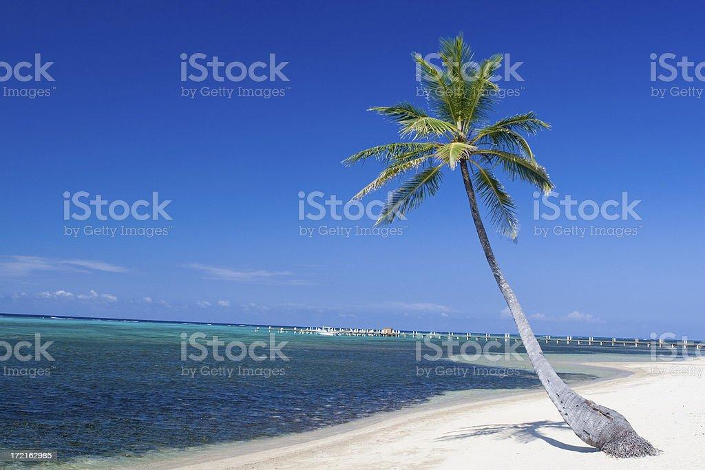 Palm tree on white sandy beach royalty-free stock photo