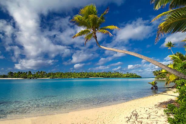palmen, einem großen island, aitutaki, cook-inseln - kochinsel stock-fotos und bilder