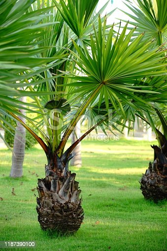 Collection of Palm trees