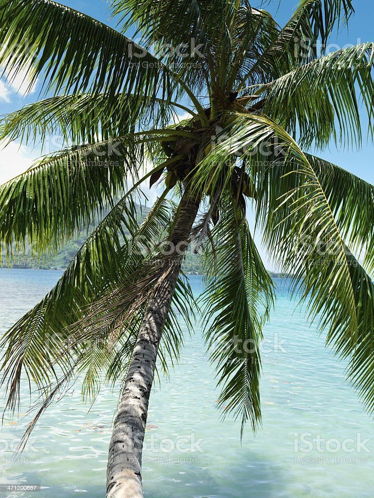 Palm Tree over Blue Tropical Lagoon royalty-free stock photo