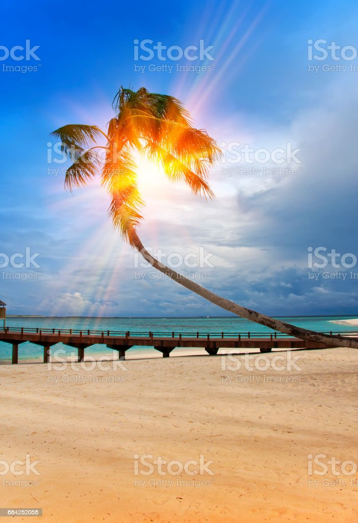 Palm tree over sea in the light of the sunset . Maldives royalty-free stock photo