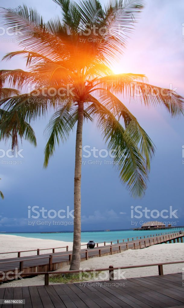 Palm tree over sea in the light of the sunset . Maldives royaltyfri bildbanksbilder