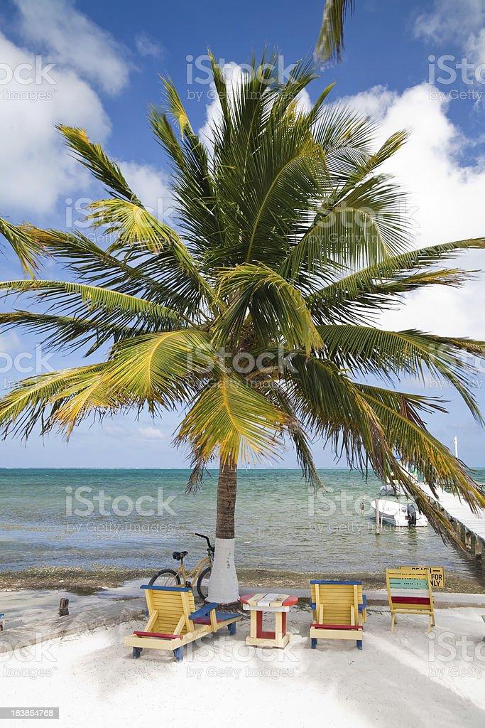 Palm tree paradise royalty-free stock photo