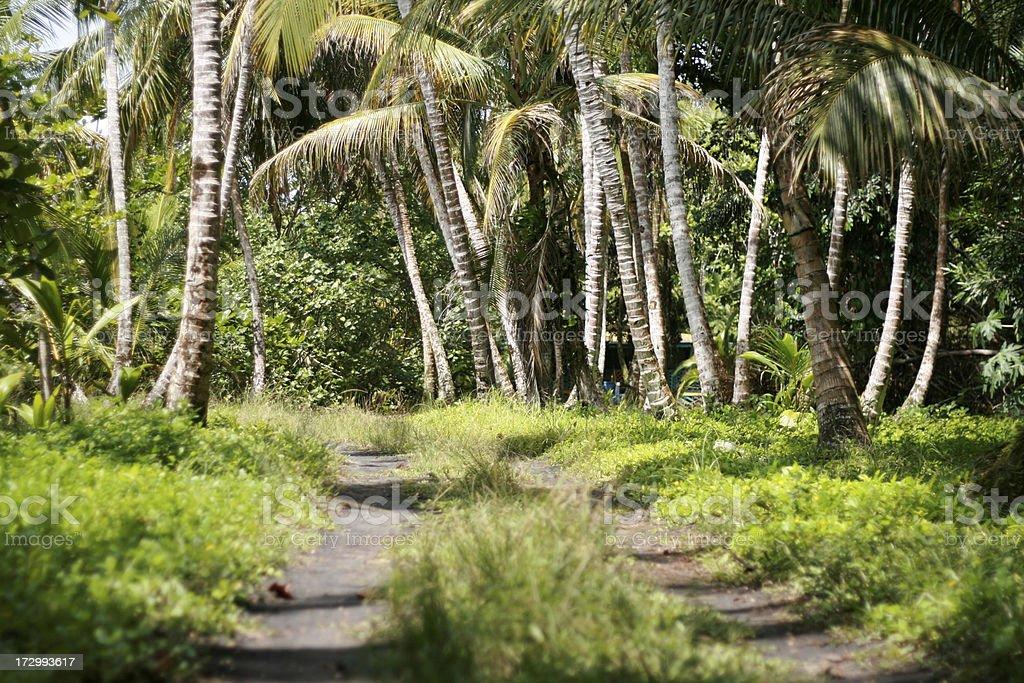 palm tree passage stock photo
