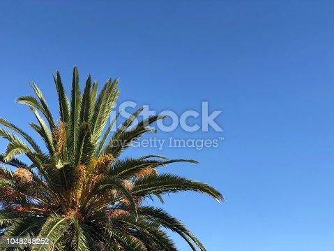 1145102719istockphoto Palm tree 1048248252