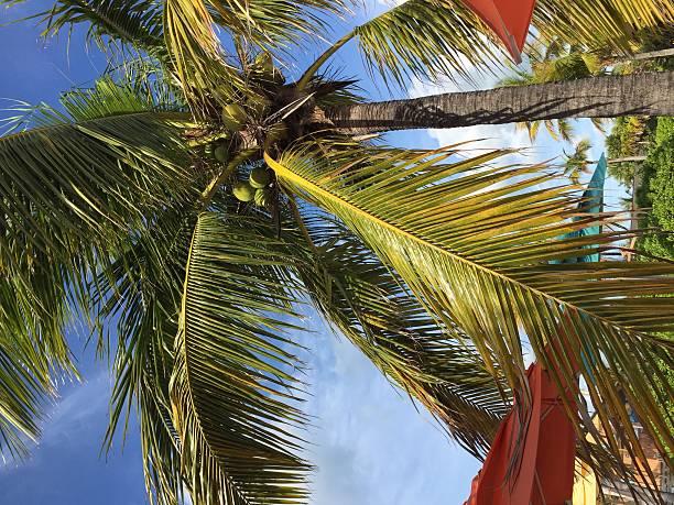 Palm tree – Foto
