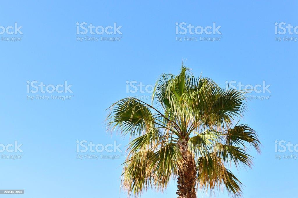 De palmeira foto royalty-free