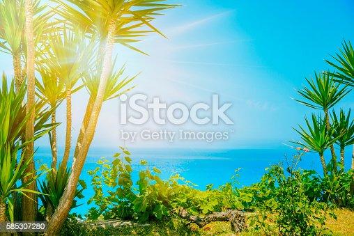 1145102719istockphoto Palm tree 585307280