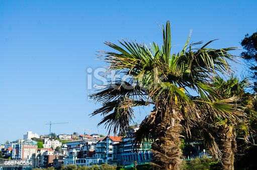 Palm tree in San Sebastian, Spain.