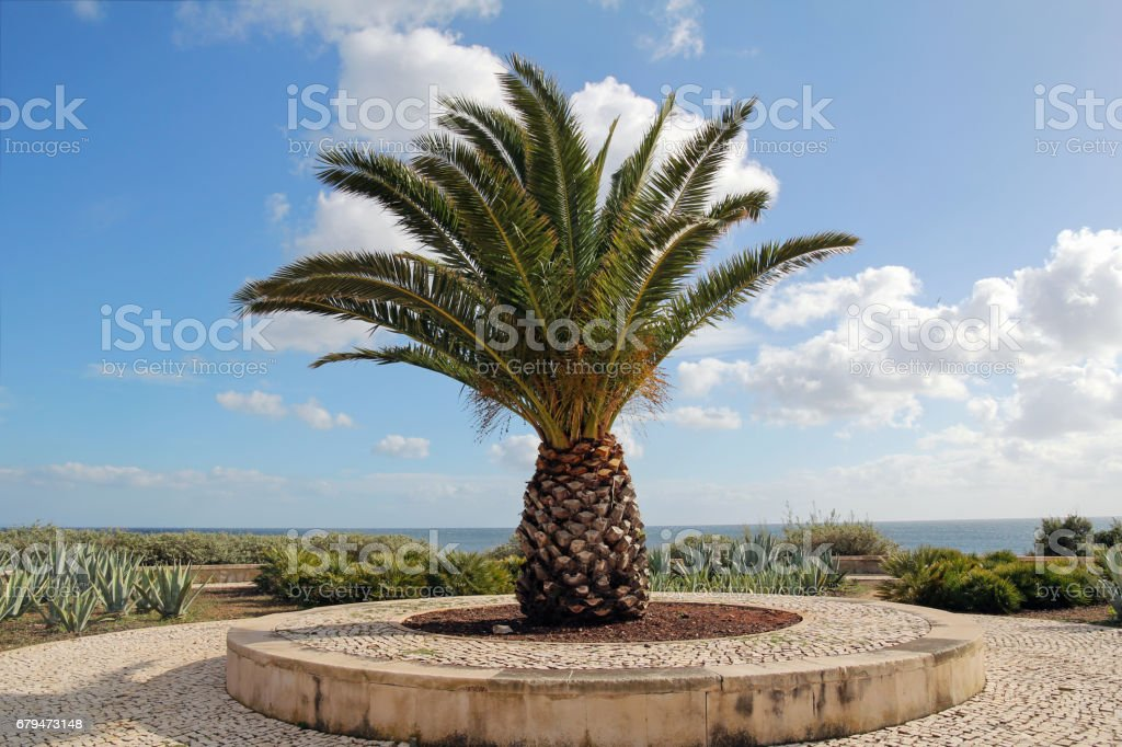 palm tree 免版稅 stock photo