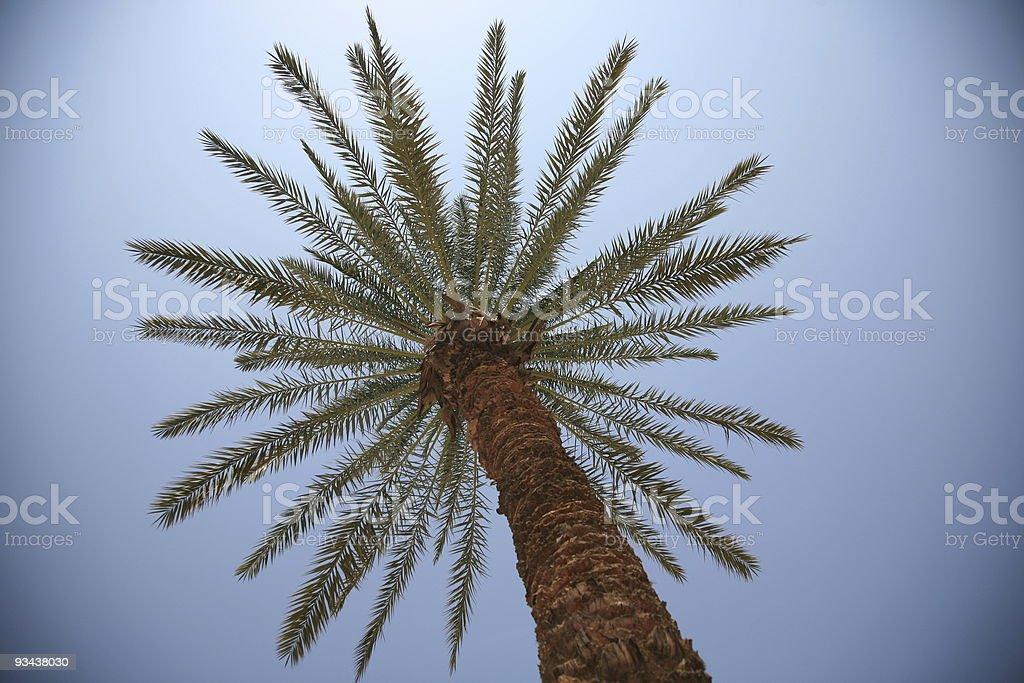 palm tree royalty-free stock photo
