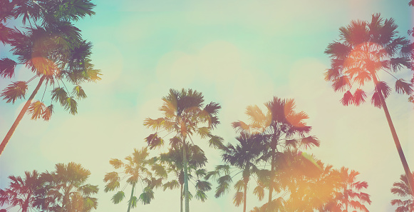 Looking up to palm tree and blue sky at summer beach. Panoramic soft style with vintage filter effect for banner background.