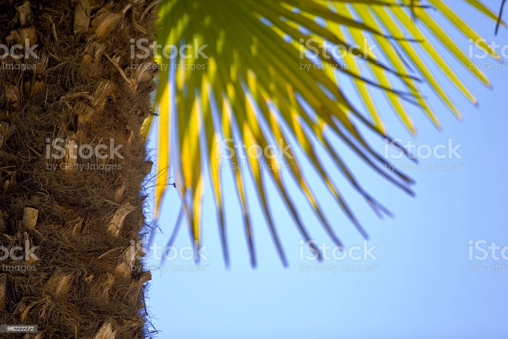 Palm Tree royalty-free stock photo