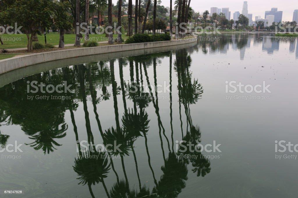 Palm Tree Reflection at Echo Park photo libre de droits