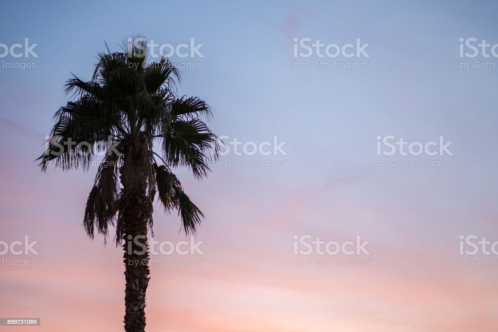 A palm tree rising into a colorful sunset stock photo