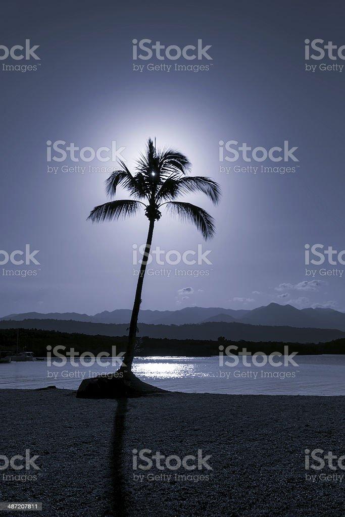 Palm Tree - Selenium Toned Image stock photo