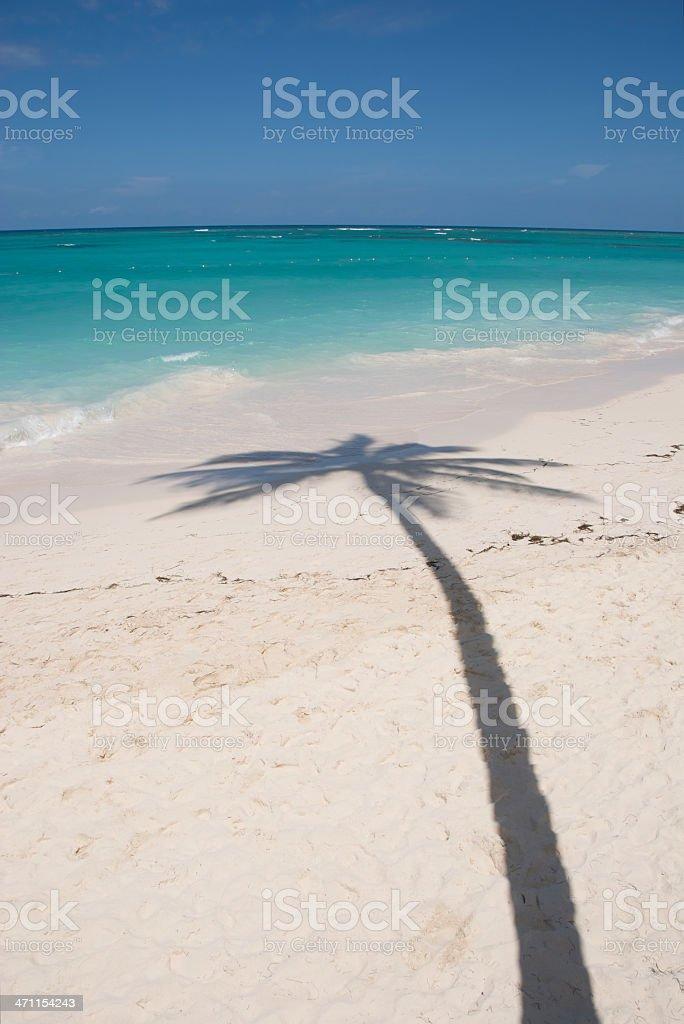 Palm Tree Shadow on Caribbean Beach stock photo