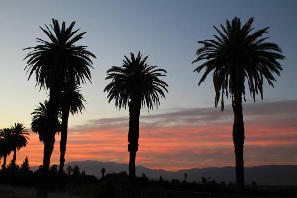 Palm Tree Shadow Sunset stock photo