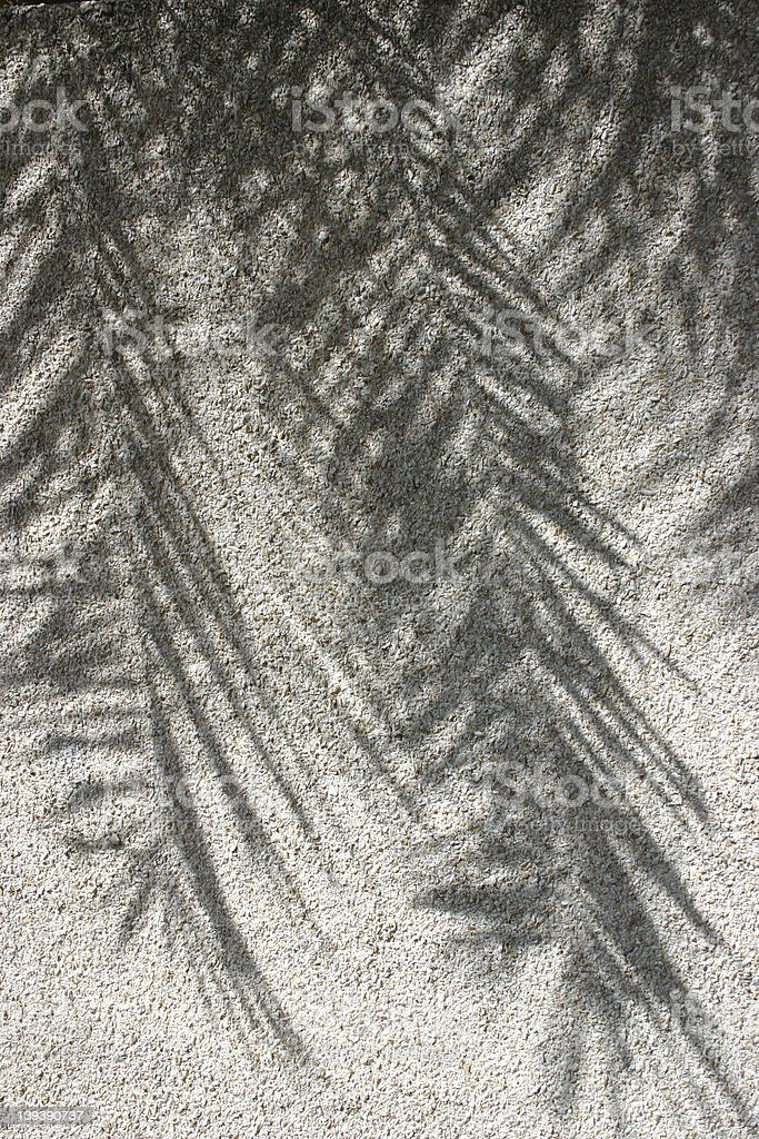 Palm tree shadows against a rocky wall royalty-free stock photo