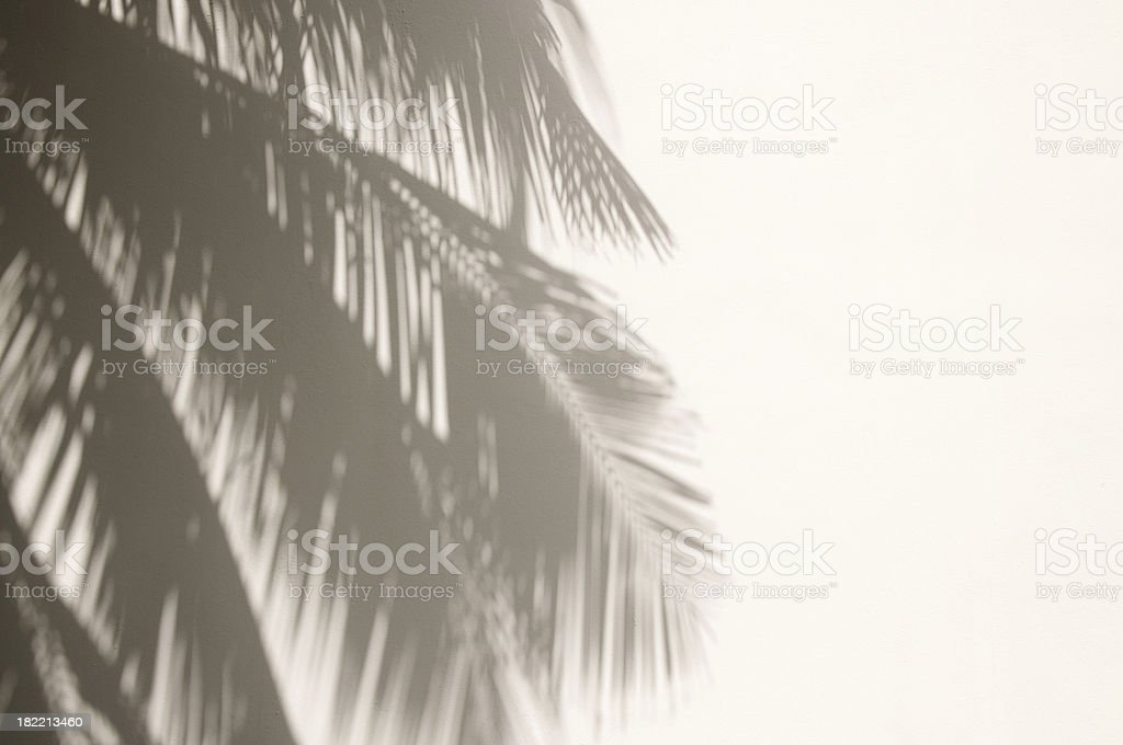 Palm Tree Shadows on White Wall stock photo