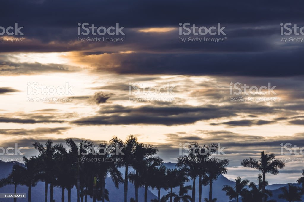 palm tree silhouette at sunrise stock photo