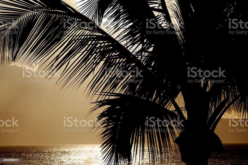 Palm Tree Silhouette at Sunset - Hawaii stock photo