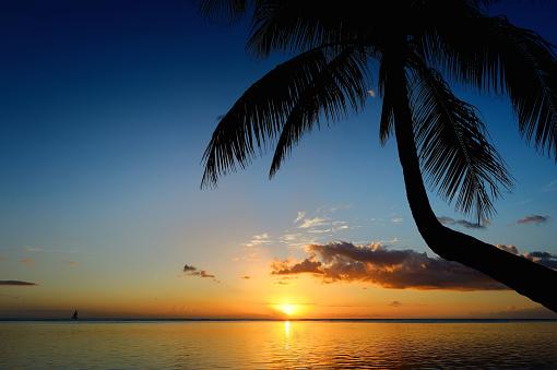 Palm tree silhouette on sunset beach
