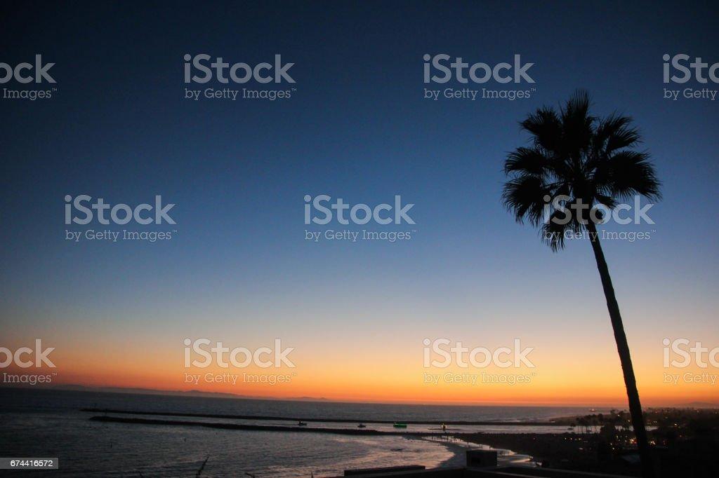 Palm Tree Silhouette stock photo