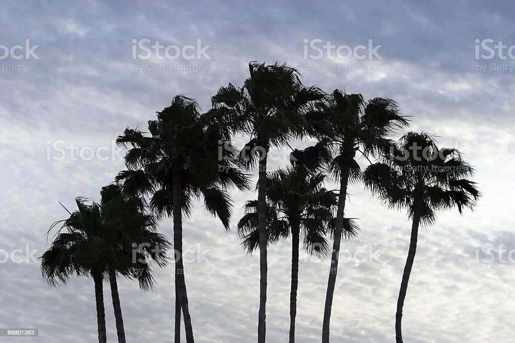 Palm Tree Silhouette royalty-free stock photo