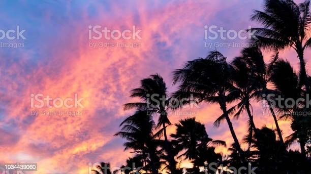 Photo of Palm tree silhouettes against colorful pink and blue sky background at sunset
