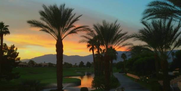 Palm Tree Silhouettes at Dusk/Dawn against a Mountain Range Background stock photo