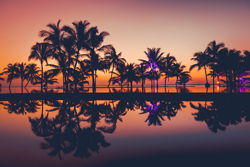 palm tree silhouettes mirroring in the swimmingpool at sunset on mauritius island in africa.