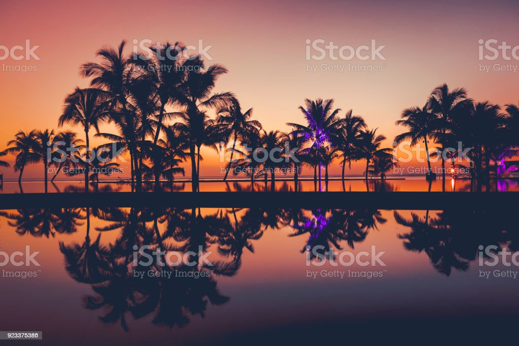 palm tree silhouettes at sunset, africa stock photo