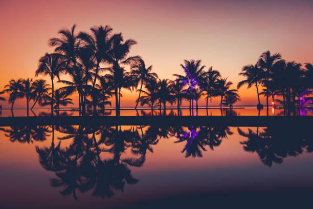 palm tree silhouetten bei sonnenuntergang, afrika - tropischer baum stock-fotos und bilder