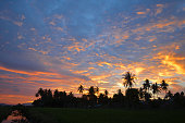 Palm tree silhouettes at sunset in Aceh
