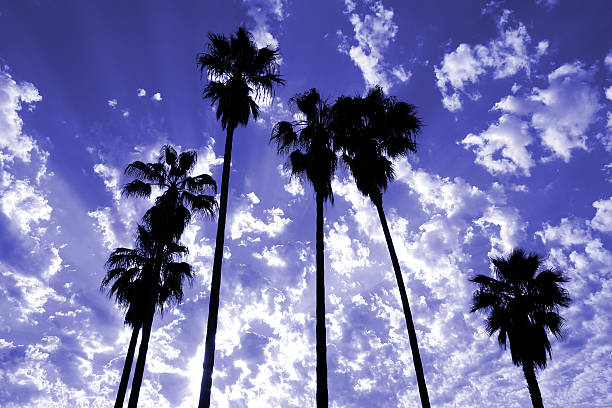 Palm Tree Silhouettes stock photo